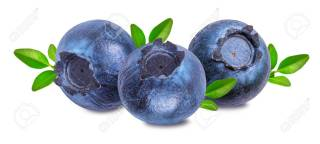 bilberry, blueberry isolated on white background